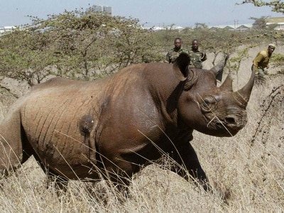 Another endangered rhino dies after move from Kenya's capital to wildlife park