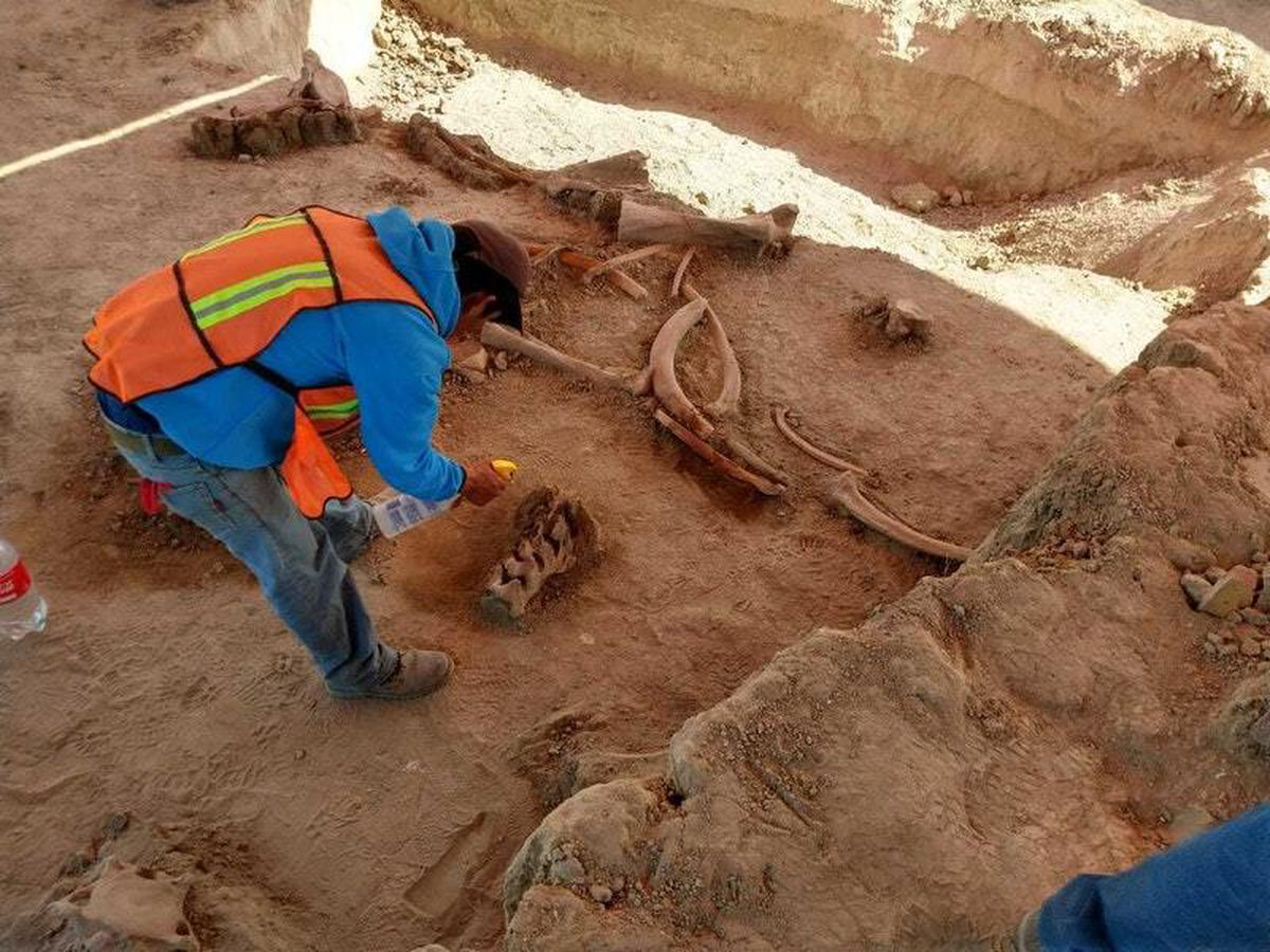 Archaeologists find bones of dozens of mammoths in Mexico