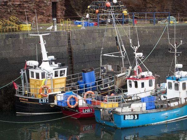 Fish export problems show that Brexit has consequences, says EU ambassador