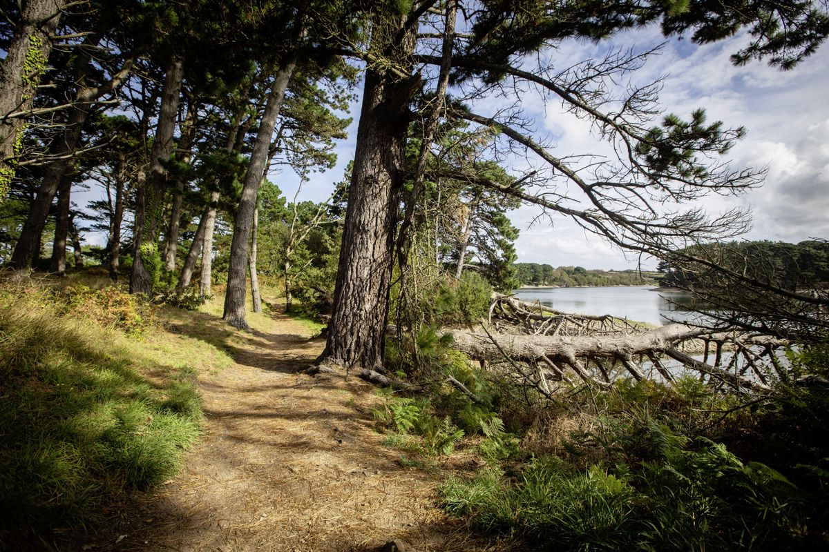 As part of its centenary celebrations, Guernsey Water is planning to develop part of the Millennium Walk to provide an outdoor learning space along with improved accessibility for everyone. (Picture by Peter Frankland, 28743793)