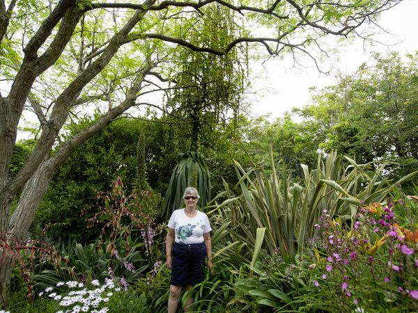 Rosemary Le Page is dwarfed by the giant plant which has bloomed for the first time. She is unsure of its identity, but believes it could be from the agave family, which blooms only once in its lifetime. (Picture by Cassidy Jones, 29664454)
