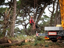 Conservationist not pining as felling of Guet trees starts