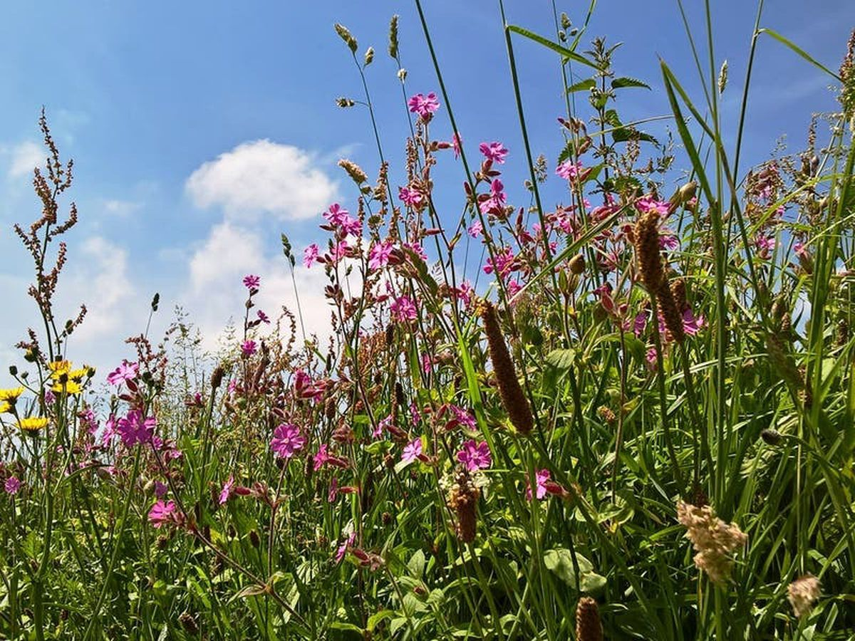 Cornwall's nature in decline, says report