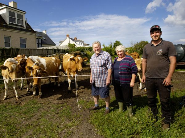Carol Allett is retiring from full-time farming after 50 years and her herd of 14 cows is going to Sark to restart milk production there. Pictured with her are Roy Le Poidevin, left, and Ben Le Page. (Picture by Cassidy Jones, 29834197)