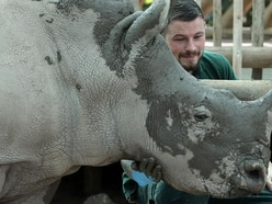 Baby white rhino treated to facial mudpack ahead of first birthday party