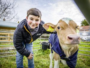 Picture by Sophie Rabey.  20-02-21.  1 week old calves from James Watts' farm Meadow Court become new additions to La Societe Conservation Herd as the conservation herd manager, Dave Bartram, takes ownership of them.  Luca Gaudion, 13, with baby cows.. (29263399)
