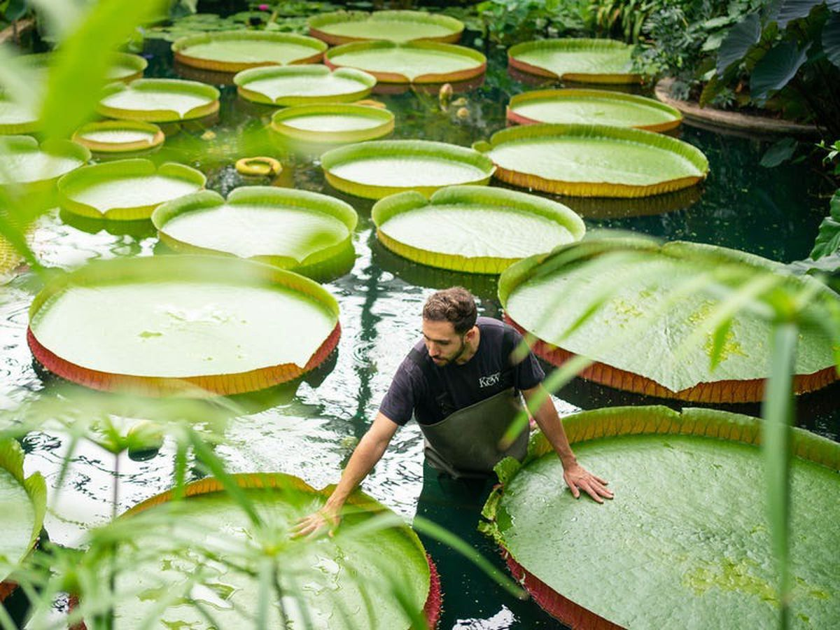 Kew Gardens gains Guinness World Record for its 17,000-strong plant collection