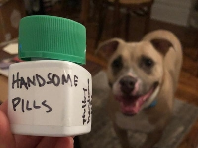 This dog owner re-branded her pet's allergy medication in crafty fashion
