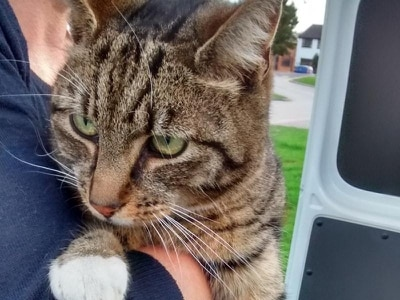 This lucky missing cat was reunited with his owners after travelling 60 miles in a lorry