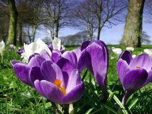 Spring emerges in Cambridge Park.