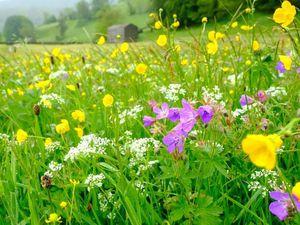 Wildflowers (25508962)