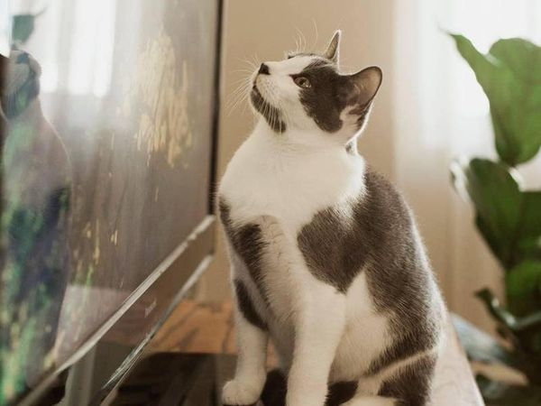 Kitten covered in several 'perfect' hearts receives outpurring of love
