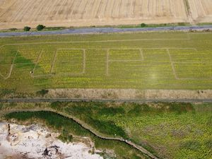 Farmer opens 'Field of Hope' among sunflowers to raise money for charity