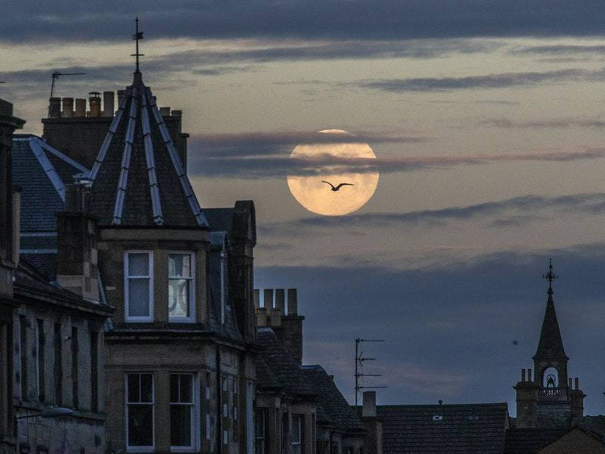 Treat Yourself to a Physically Distant Viewing of Tonight's Pink Supermoon