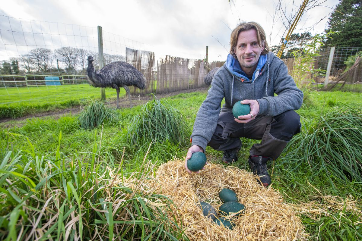 The Accidental Zoo owner Ryan Le Guilcher with the emu eggs. (Picture by Sophie Rabey, 29024925)