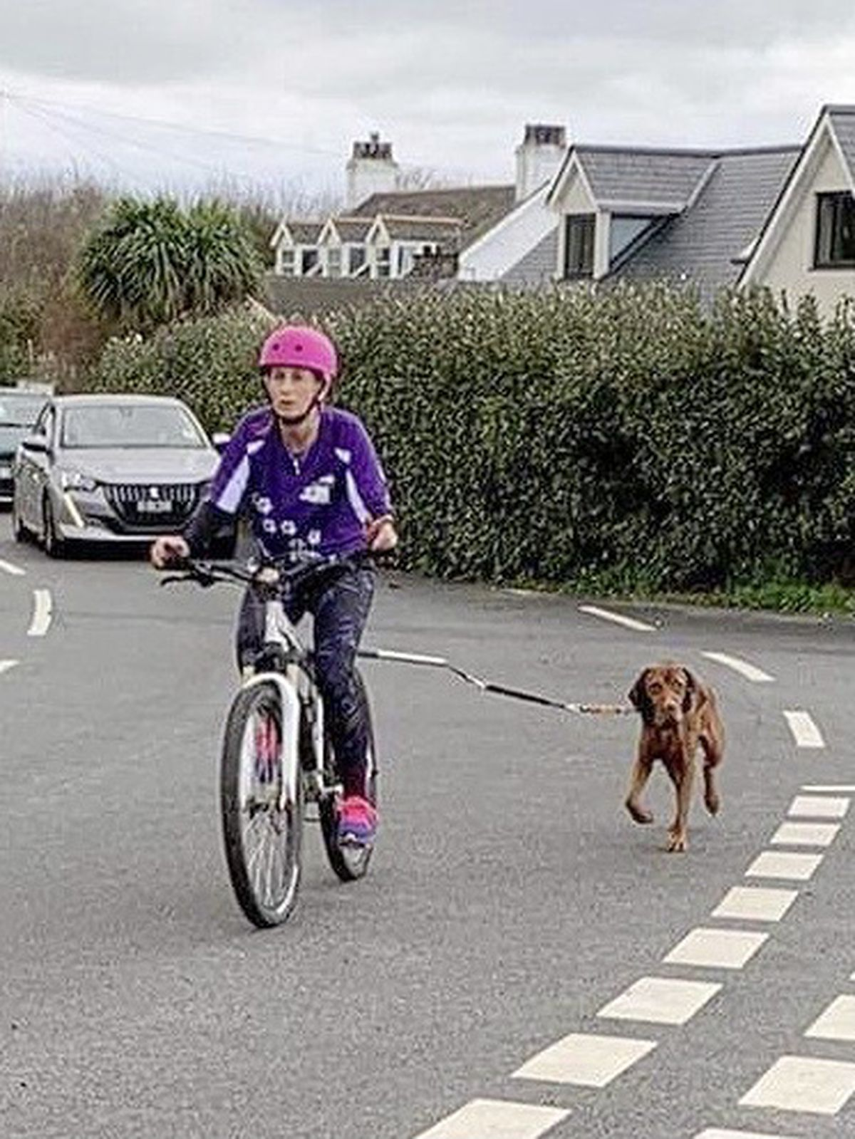 12 teams took just over six hours in relay to complete a lap of the island in the first canicross event. Pictured is Nicola Brouard who cycled the leg from Rousse to Chouet with her Alaskan malamute, Sammy. (29002988)