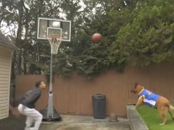 Watch a dog assist a basketball player with a textbook alley-oop