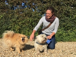 Volunteers step in for struggling dog owners