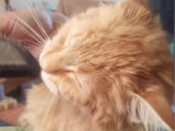 This cat getting brushed after a bath is the embodiment of pure joy