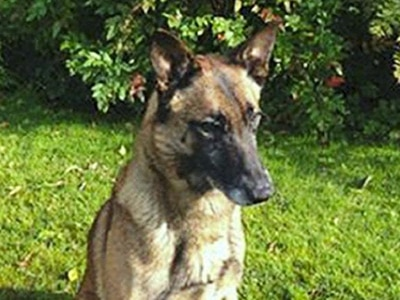 Police dog hailed after catching escaped murderer