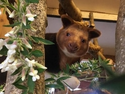 NHS staff at Bristol Royal Infirmary 'delighted' to name baby tree kangaroo