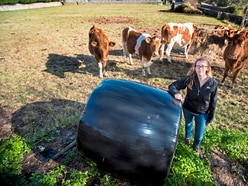 Conservation herd short of winter feed after theft