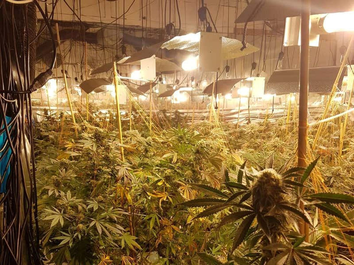 Million-pound cannabis farm discovered in former nightclub