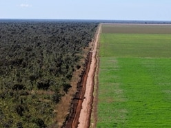 Tesco donates £10 million towards ending deforestation in Brazil