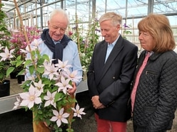 Lt-Governor sees bid for clematis gold