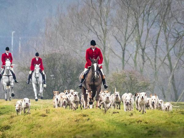 'No plans' to change Hunting Act despite trail-hunting row