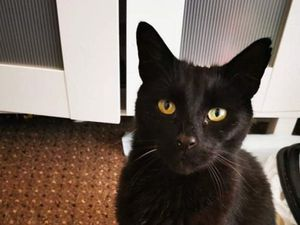 Furry cross the Mersey! Cat reunited with family after seven years