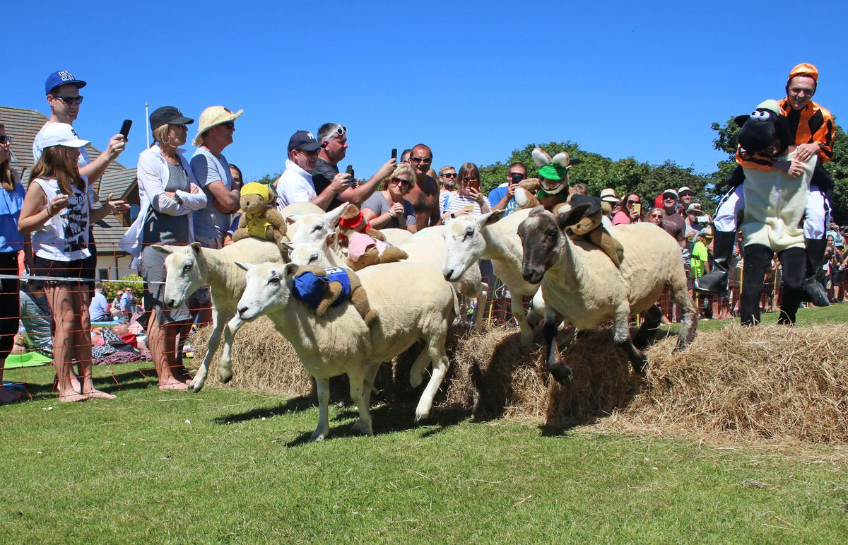 Sheep racing is due to return this summer.