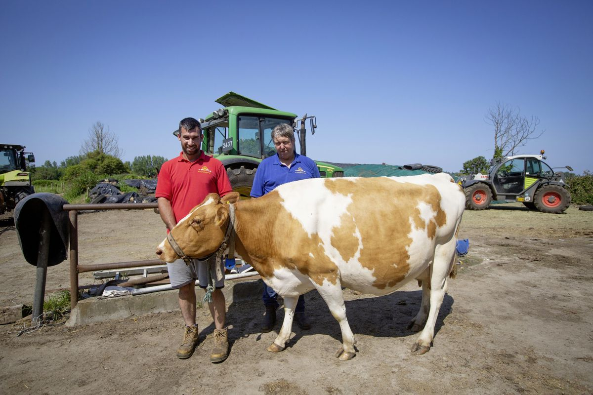 Son and father Alex, left, and Robin Jamouneau with their cow St Catherine's Paddy which will be at today's Royal Agricultural and Horticultural Society Show at Saumarez Park. (Picture by Cassidy Jones, 29787232)