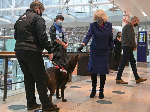 Camilla and Health Secretary hail Covid-19 sniffer dog demonstration