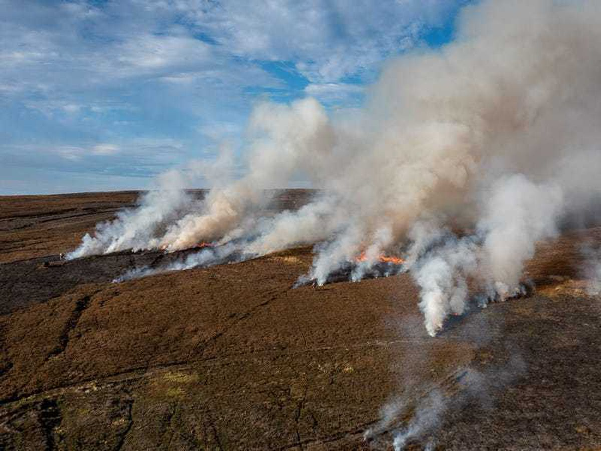 Green groups renew calls for ban as peatland burning takes place ahead of Cop26