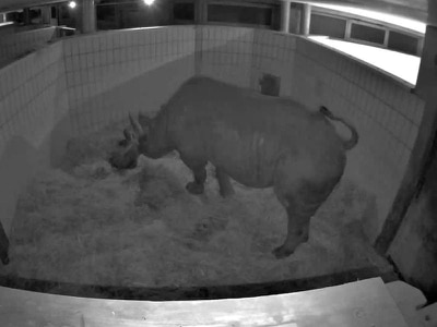 With perfect timing, this rhino gave birth on World Rhino Day