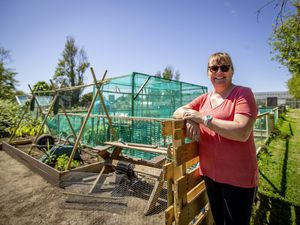 Picture By Sophie Rabey.  04-06-21.  Jane King, owner of La Haute Lande Vinery on Les Abreuveurs Road.  Interview regarding the popularity of people having and enjoying allotments.. (29622601)