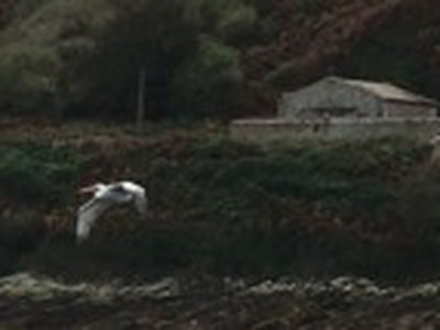 Pelican's Alderney visit thought to be first ever