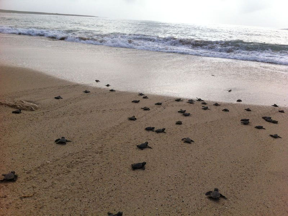 Simple intervention could help stabilise turtle populations – research