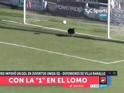Dog makes incredible save in Argentinian league game