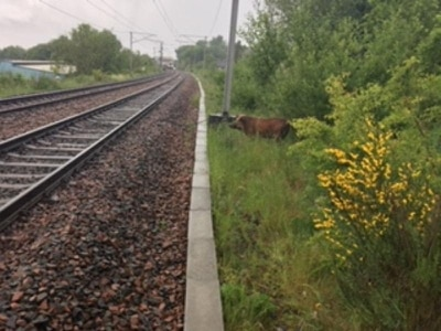 Wild boar disrupts rail services for several hours