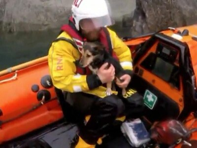 Watch: Brave Jack Russell rescued by the RNLI after falling down a cliff
