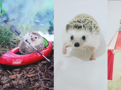 Let this little hedgehog take away all your worries