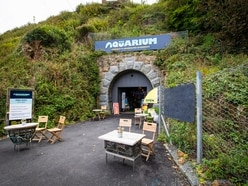 Aquarium owner worried for future as business slows