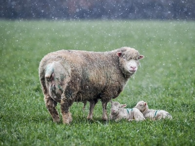 Start of British Summer Time marked with snow showers