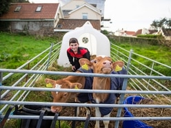 New calves will join conservation herd