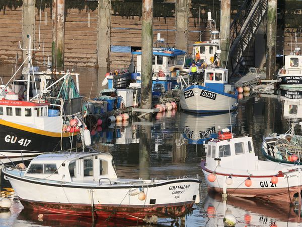 Pic by Adrian Miller 15-01-21 Fish Quay St Peter Port Harbour - fishing boats fishing generic gpweb brexit europe waters fish. (29183984)