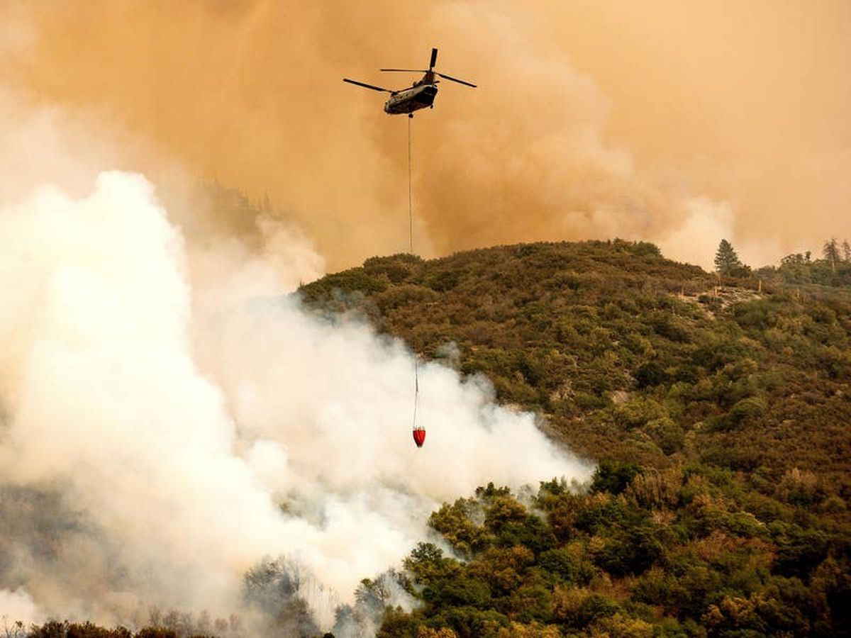 California forest fires threaten world's largest trees