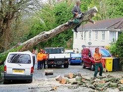 Tree down in Alderney, travel disrupted as gales continue