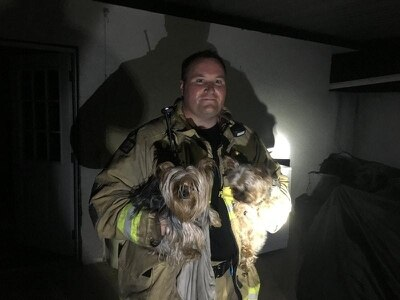 See the Yorkshire terriers rescued after house fire